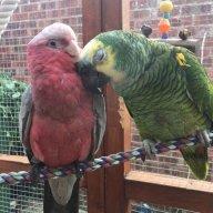parrotlove